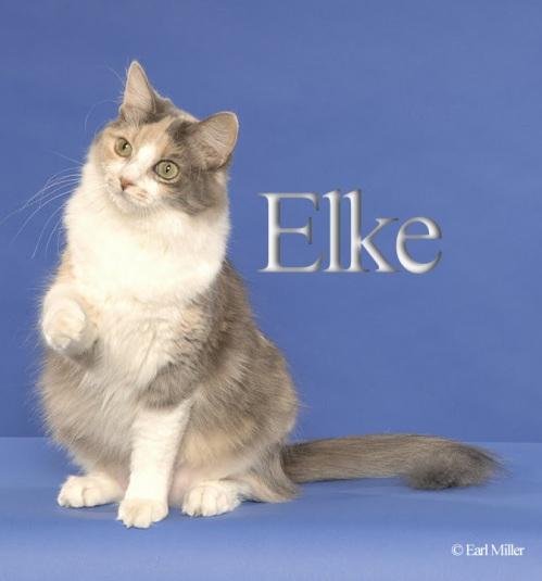 Elke sweet girl